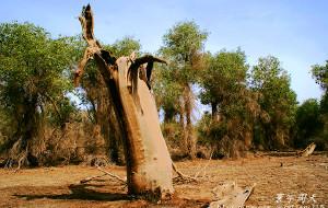 【轮台图片】千年胡杨林——不朽的沙漠脊梁
