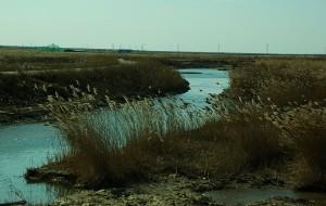 【东营图片】东营黄河湿地