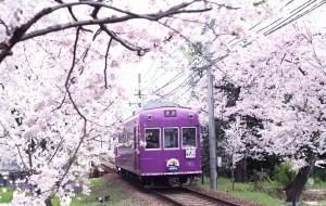 【日本图片】关西第一眼樱花:漫步京都 花落奈良小鹿  樱花七日 如同一场粉色的梦。