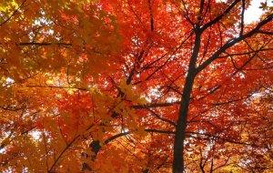【神木图片】陕西大神木的赏秋绝佳圣地