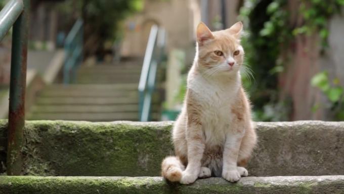 猫为什么长得那么可爱