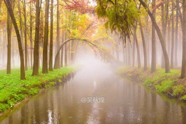 1.跌入人间仙境:泰州李中水上森林公园,雨后的森林公园,更有一番风味.