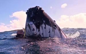 【汤加图片】汤加vavau 鲸鱼的诱惑(游玩篇)