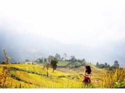 越南萨帕的秋天,黄黄的梯田_游记