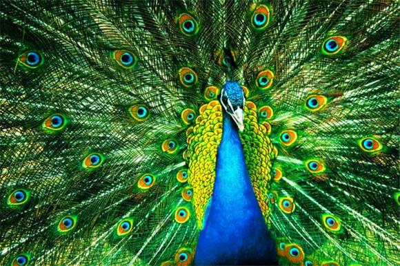 沈阳森林野生动物园门票