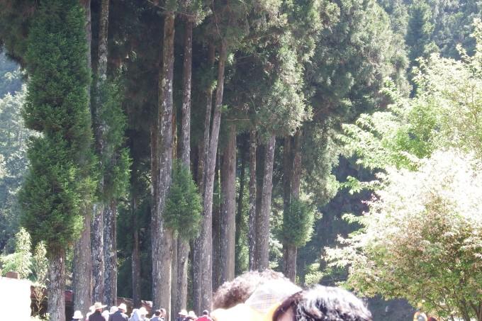 """大家顺着""""仔仔""""的手朝树上看去,看长在树上的天然灵芝是什么样子"""