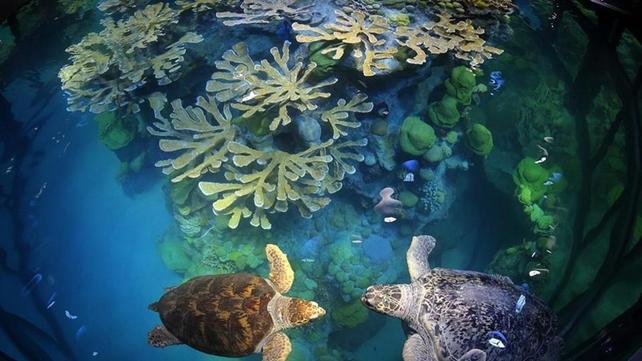 壁纸 海底 海底世界 海洋馆 水族馆 642_361
