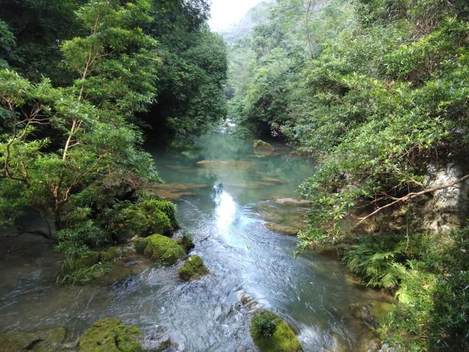 石上森林         图片
