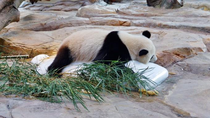 长隆野生动物园,广州长隆旅游度假区自助游攻略 - 马