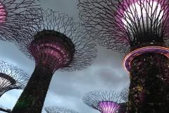 又见花园城市,美丽的狮城--新加坡