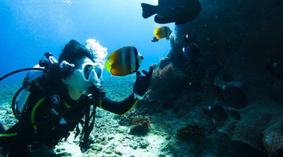 推荐理由: 1、潜水入海,在蓝色海域之中探访神秘海底世界; 2、在海中与保护动物绿蠵龟共同畅游; 3、国际合格潜水教练耐心教导,保障您在体验中的安全; 活动概览: 深入海中,潜水在蓝色的海底,竟然还能近距离接触到保护动物——绿蠵龟!海底奇观不再只是透过屏幕中的场景去探寻,真切地融入在柔软海水中,体验水中无重力的自由漂浮感,感受日常生活无法体验的奇妙旅程,进入另一个意向不到的奇幻世界。同时,国际合格潜水教练将耐心教导你如何在水底呼吸、安全愉快的进行潜水活动。水中的40分钟,会感受到前