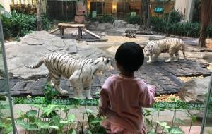 【广州长隆旅游度假区图片】田田宝宝的2周岁亲子游—广州长隆