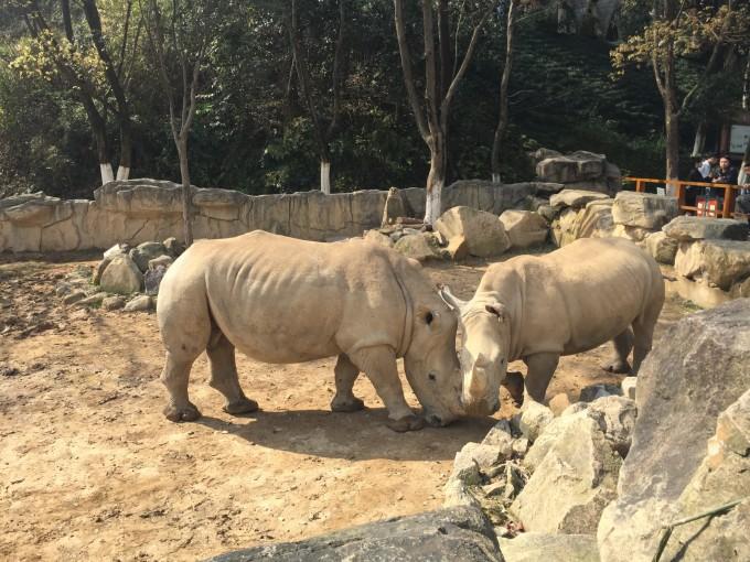 温州动物园半日游