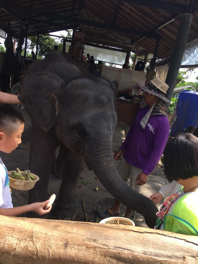 这只大象太调皮了,走走停停,一会跑到一边摘树叶,一会儿停下来休息,高兴了还跑几步,我在象背上吓得呀孩子高兴