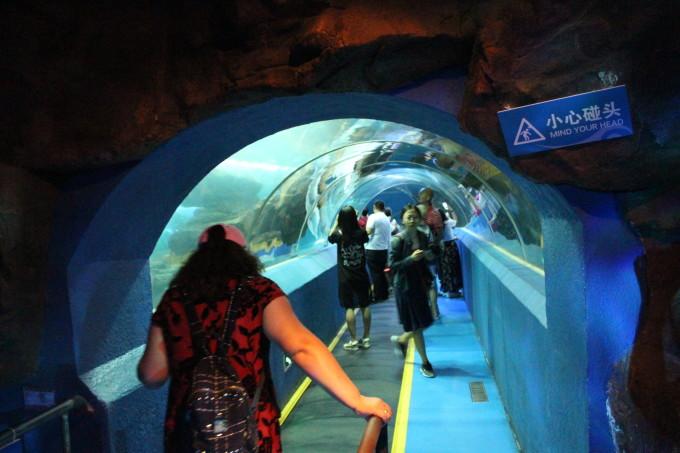青岛海底世界主要由潮间带,海底隧道和地下四层观光建筑三大部分构