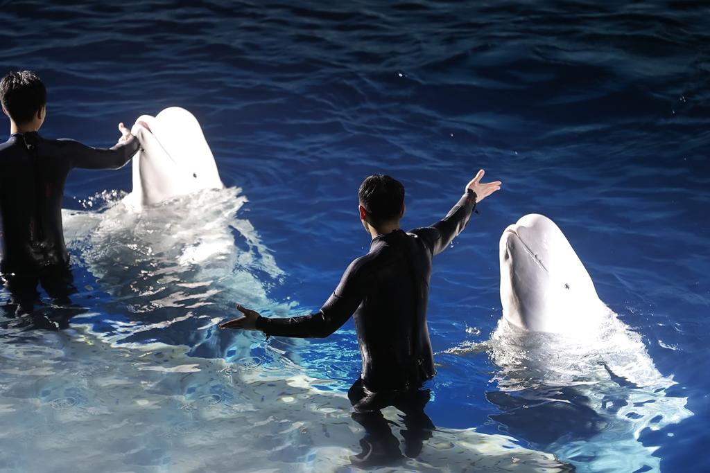 上海长风海洋世界景点门票 与萌萌北极熊互动 含极地白鲸馆及艺术水族