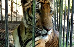 宿雾娱乐-Cebu Zoo