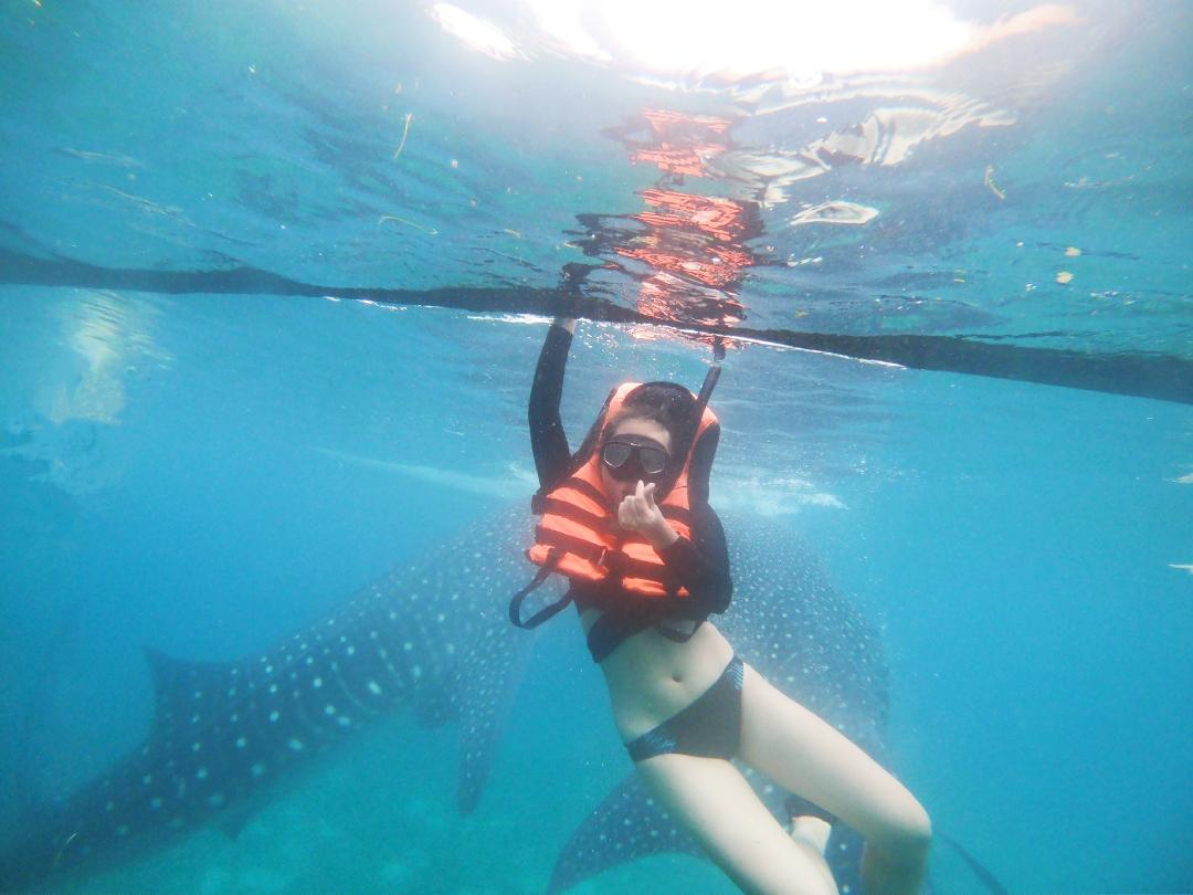 带15个月的娃囧游菲律宾杜马盖地鲸鲨海龟潜水圣地