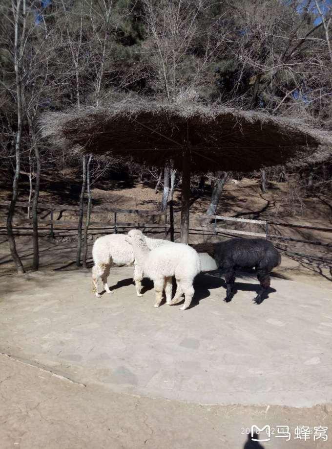 沈阳市棋盘山动物园