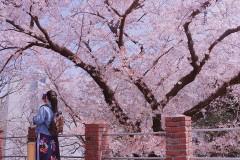 釜山的樱花也很美~2018年3月30日-4月4日Busan听海,看樱花,吃美食~
