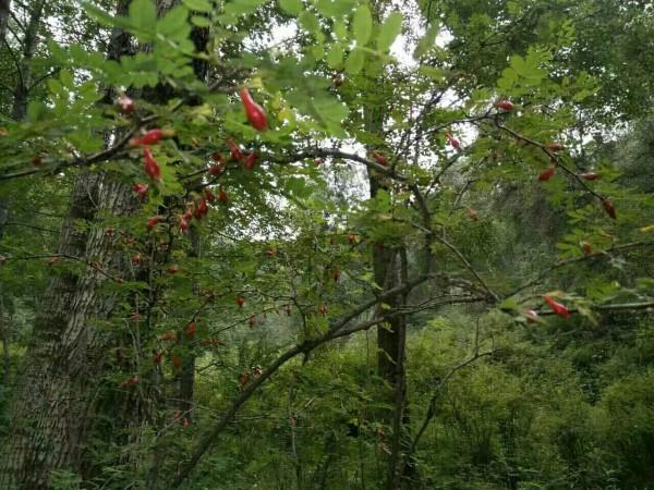 湟源 游记           拉尔贯自然风景区位于青海省湟源县城郊乡,位于