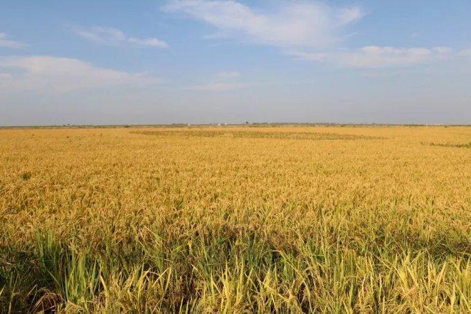 熏衣草庄园 沈阳紫烟薰衣草庄园位于沈阳市沈北新区马刚乡马泉村,在