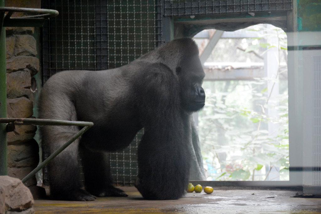 济南动物园成人票