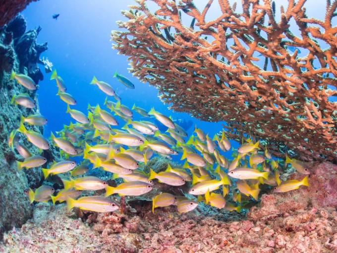浪中岛夏日海湾渡假村 浪中岛夏日海湾渡假村 热浪岛海洋生态公园