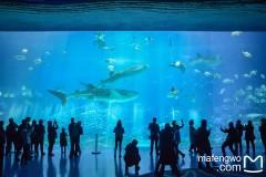 鲸鲨、水母、白鲸、企鹅…我能站着看两天!   4月出行推荐:南宁-珠海长隆