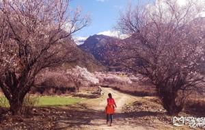 【突尼斯图片】关于西藏林芝桃花劫的看花攻略【内含攻略、包车、大量美图】