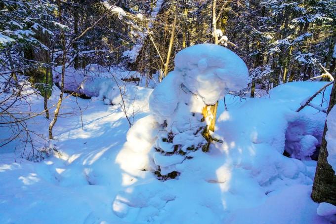 长白山地下森林冬日极具观赏性,没有了夏日的浓荫郁郁,却有漫山