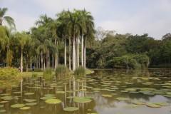 云南游览之二 ------ 游览西双版纳中科院热带植物园(上)