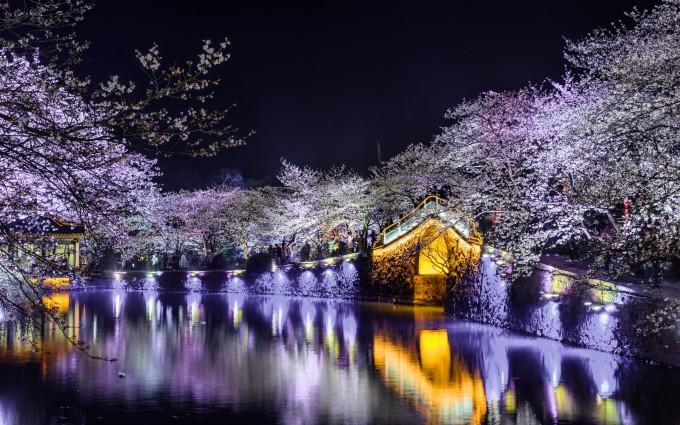 春风渐暖,又快到赏樱的大好时光,补录2018鼋头渚夜樱花观赏记。 我们大多在白天观赏樱花,不缺各种美丽的辞藻来描述:樱花如雪,落英缤纷,飞雨如霞。不同于白天,夜晚的樱花加上灯光的点缀,给人如梦似幻的不真实感。其时,整个鼋头渚恍若琼林仙阁,美丽异常。观赏夜樱还有一个好处就是没有白天那么拥挤。白天的鼋头渚赏樱游客可不是一般的蜂拥嘈杂,常常是满眼望去人头济济,樱花了了 -->  ,都被人挡住了。 下面我就看图说话,来一场夜樱之旅吧。
