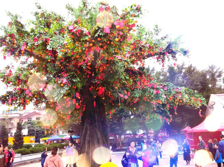 香港林村许愿树