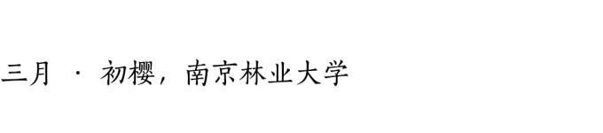 三月 · 初樱,南京林业大学