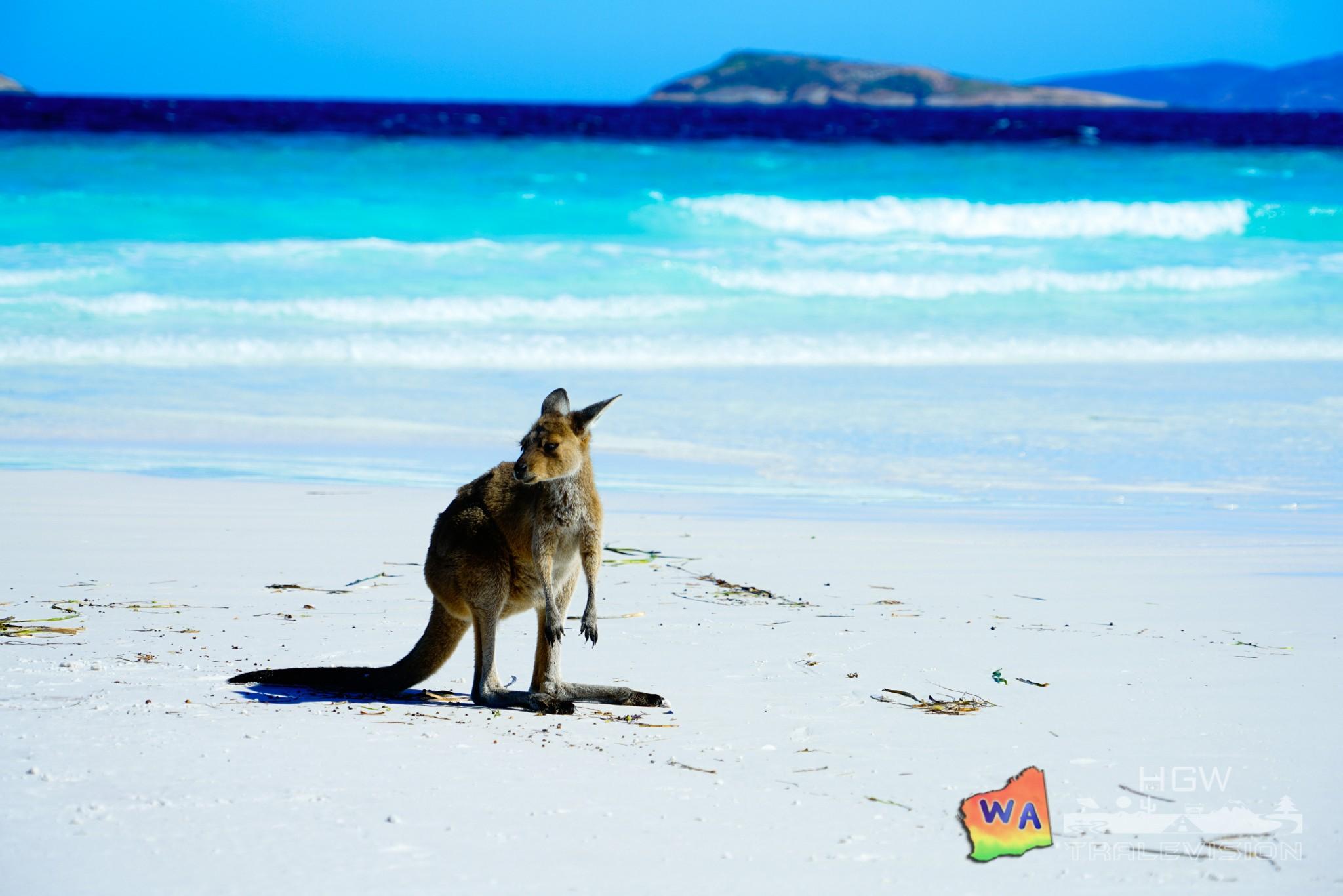 ·【西澳大利亚】四千公里的南回归线_游记