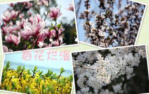 【常熟图片】春花烂漫醉美尚湖