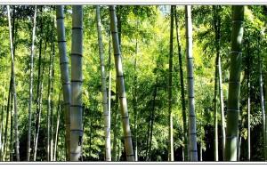 【安吉图片】中国美丽乡村--安吉
