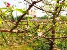 颐卉薰衣草庄园