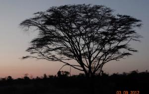 【内罗毕图片】Jambo 马赛马拉-内罗毕-肯尼亚