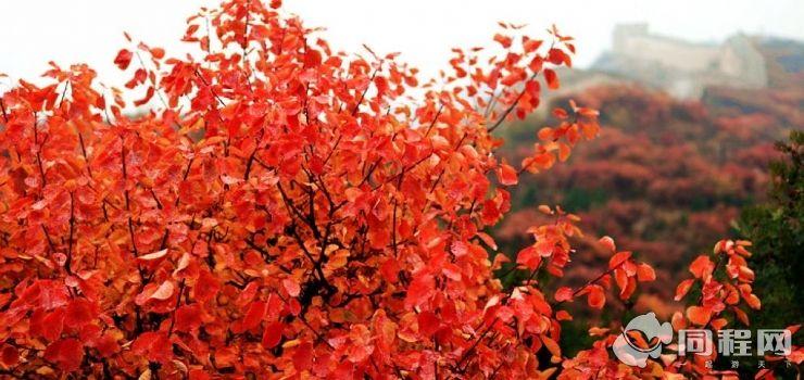 八达岭国家森林公园红叶岭