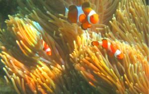 【丽贝岛图片】畅游安达曼海中的无暇明珠——兰卡威、丽贝岛游记