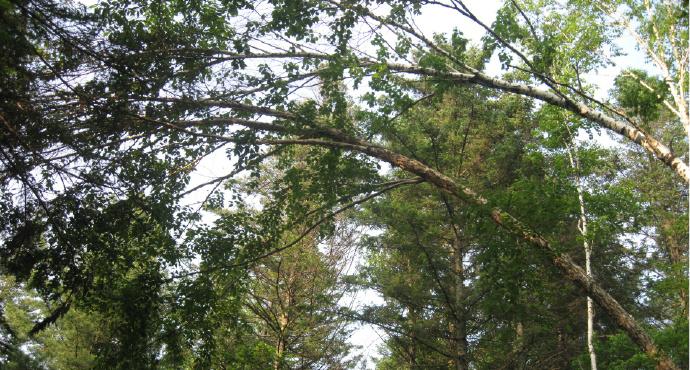 汤原大亮子河国家森林公园攻略,大亮子河国家森林公园