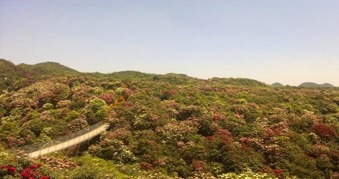 黔西县有百里杜鹃国家森林公园旅游区和柳岸水乡旅游区两个著名旅游