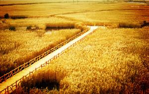 【东营图片】东营:黄河入海芦苇飘,叩问心灵的呐喊