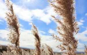【临江图片】最好的时光在路上——致呼伦贝尔草原