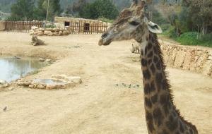 以色列娱乐-Tisch Family Zoological Gardens (Biblical Zoo)