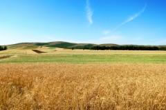 八月,拥抱锡林郭勒草原......