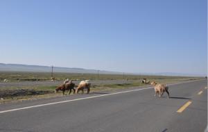 【巩乃斯图片】新疆自驾游行程及途中景色之二