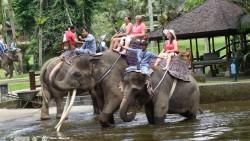 巴厘岛景点-大象野生动物园(Taro Elephant Safari Park)